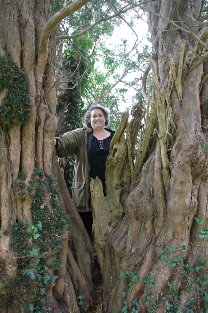Llansilin – this site was in existence in the earl middle ages and is notable because it has four ancient yews and two veterans. A great first stop to see a lot of yew trees. For the record, I did ask the tree's permission before boarding it for this photo.